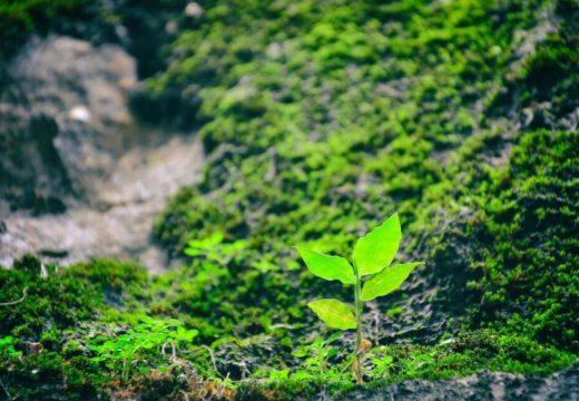 芽が生えた木