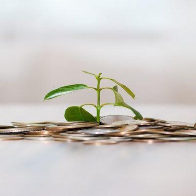 お金から芽がはえているイメージ図