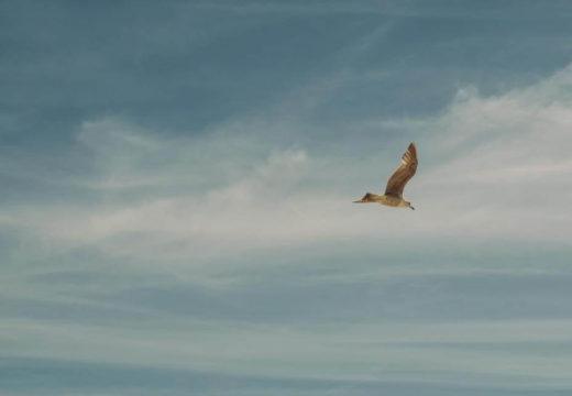 鳥が飛んでいる画像